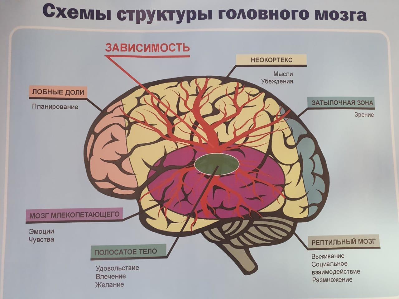 Схемы головного мозга при употреблении наркотиков